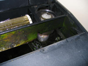 I Clean The Skimmer Every Few Months And Replace Airstone 4 Thank You For Sharing Dennis Will Post On Daily Faq S